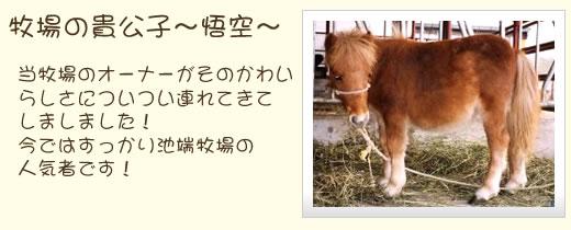 about-goku.jpg