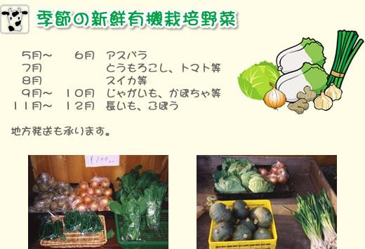 季節の新鮮勇気栽培野菜